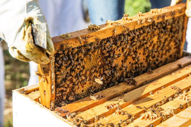 POZIV OSOBAMA ZA INVALIDITETOM ZA BAVLJENJE PČELARSTVOM