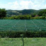 Противградне мреже за 37 произвођача органске малине у Фочи
