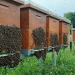 Помоћ пчеларима